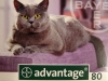 mini-clubdelcane-advantage80gatto