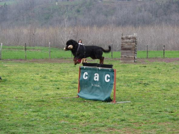 un concorso canino