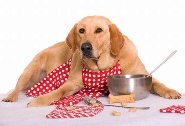 clubdelcane alimentazione cani e gatti