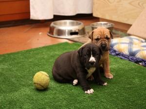 Come educare il cucciolo a sporcare nel luogo scelto e for Casa progetta il trotto del cane