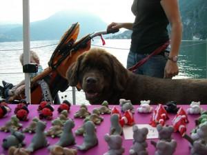 club del cane educazione cinofila cane con famiglia