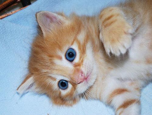 Come Insegnare Al Gatto Ad Usare La Lettiera Club Del Cane