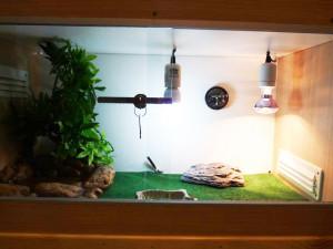 clubdelcane-terrario per rettili