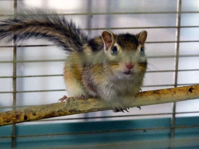 mini-clubdelcane-scoiattolo1